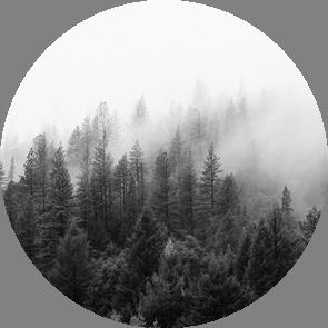 Научные дебаты «Оценка поглощения парниковых газов лесами: мифы и реальность»