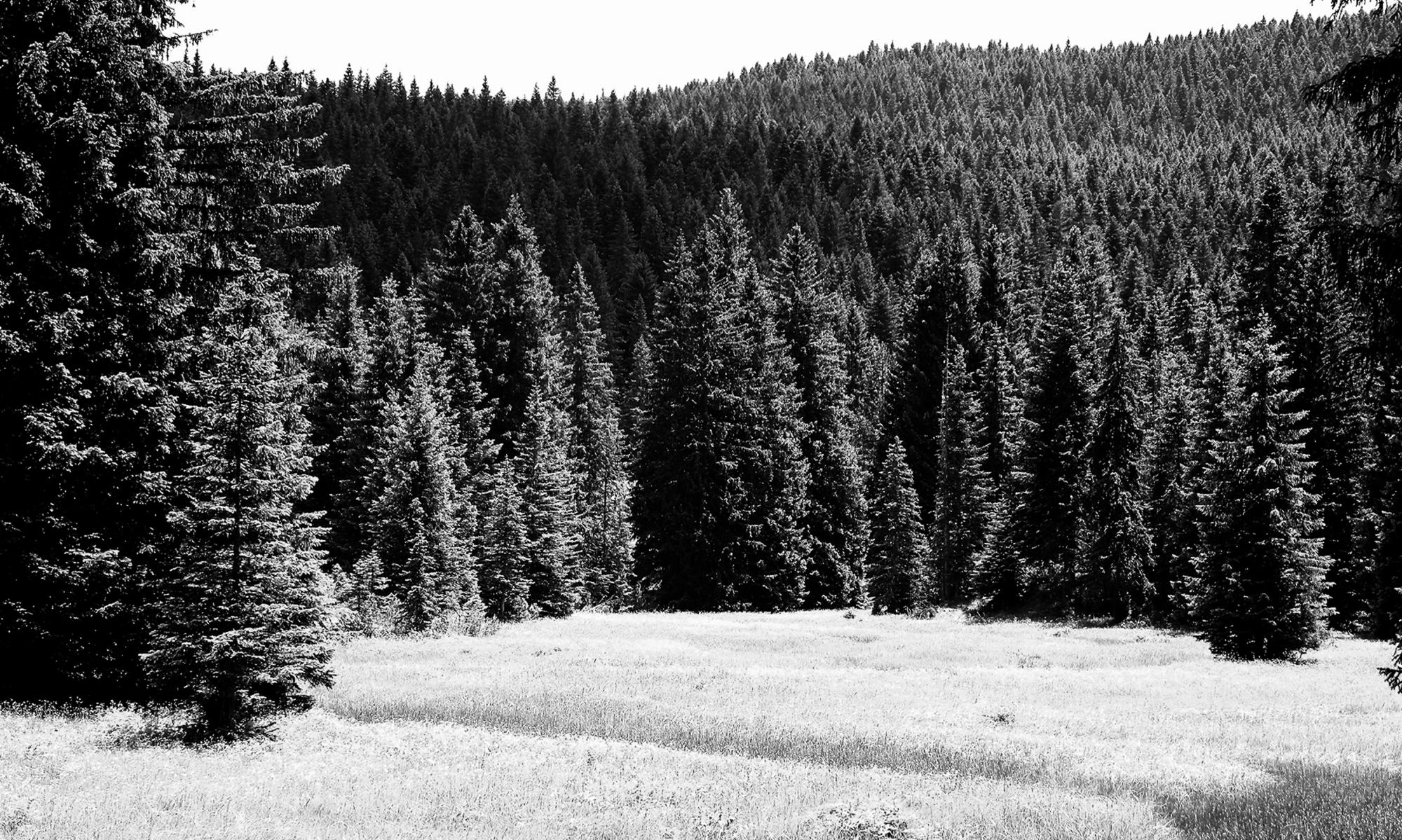 """Модуль """"Лес и изменение климата"""" и его составляющие"""